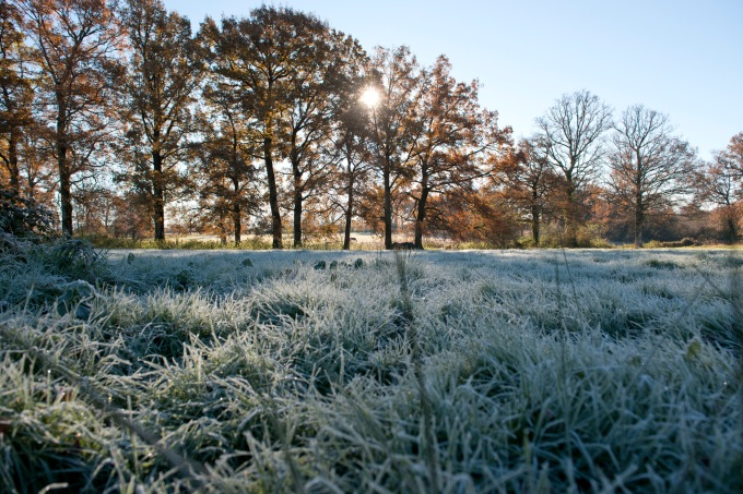 Sun and Frost