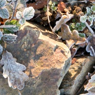 Icy leaves and sunlit stones