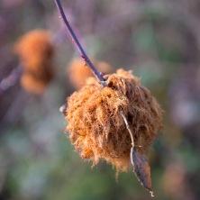 Seed husks