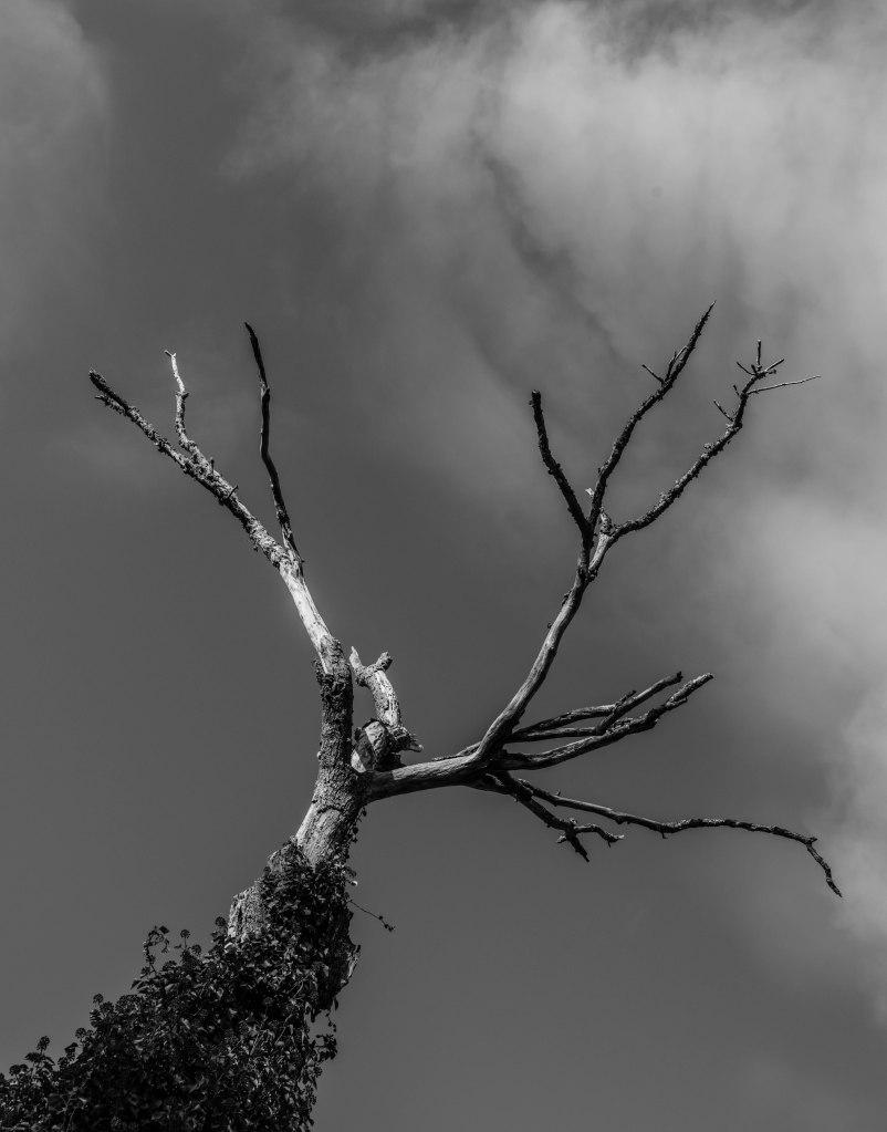 TreesB&W