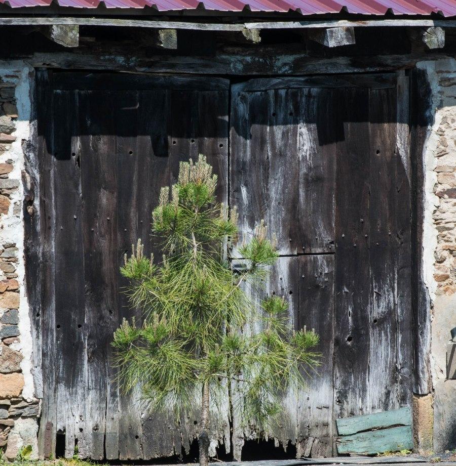 Bernard's Barn