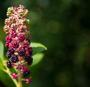 A nice flowerhead in itself, but a shame to waste that bokeh.