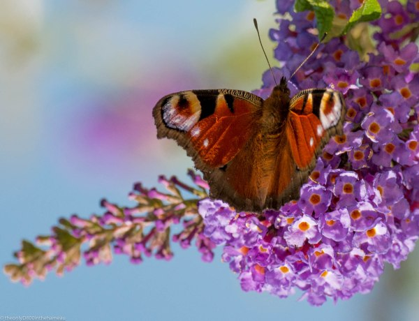Butterfly after