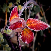 WPC: 'It's Not This Time of Year Without...Frost'