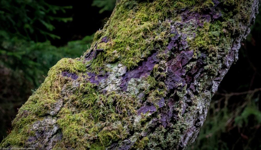 moss-on-tree